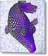 Guinea Fowl Puffer Fish In Purple Metal Print by Bill Caldwell -        ABeautifulSky Photography
