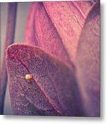 Gulf Fritillary Butterfly Egg Metal Print by Priya Ghose