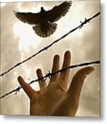 Hand Reaching Out For Bird Metal Print by Nathan Lau