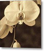 Hanging Orchid Metal Print by Garry Gay
