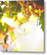 Harvest Time. Sunny Grapes I Metal Print by Jenny Rainbow