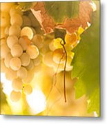 Harvest Time. Sunny Grapes Vi Metal Print by Jenny Rainbow