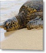 Hawaiian Green Sea Turtle 3 Metal Print by Brian Harig