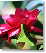 Heavenly Perfection Metal Print by Suzanne Gaff