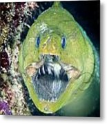 Hello There Metal Print by Jean Noren