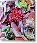 Hens And Chicks Series - Copper Tarnish  Metal Print by Moon Stumpp