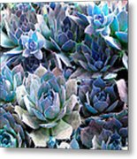 Hens And Chicks Series - Evening Light Metal Print by Moon Stumpp