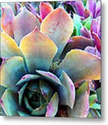 Hens And Chicks Series - Unfolding Metal Print by Moon Stumpp