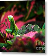 Here I Am Metal Print by Robert Bales