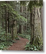 Heritage Forest Metal Print by Randy Hall