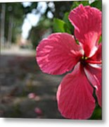 Hibiscus Metal Print by Frederico Borges