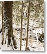 Hiding In The Trees Metal Print by Tim Grams