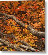 Holding Back Metal Print by Peter Coskun