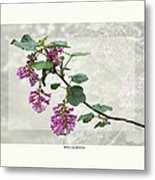 Ribes Sanguineum - California Currant Metal Print by Saxon Holt