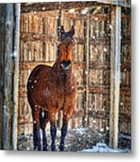 Horse And Snow Storm Metal Print by Dan Friend