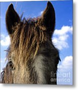 Horse Metal Print by Bernard Jaubert