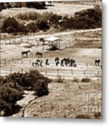 Horse Farm At Kourion Metal Print by John Rizzuto