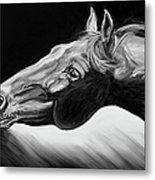 Horse Head Black And White Study Metal Print by Renee Forth-Fukumoto