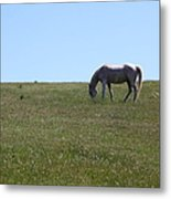 Horse Hill Mill Valley California 5d22664 Metal Print by Wingsdomain Art and Photography