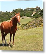 Horse Hill Mill Valley California 5d22679 Metal Print by Wingsdomain Art and Photography