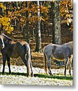 Horses In Autumn Pasture   Metal Print by Susan Leggett