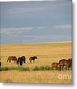 Horses In Saskatchewan Metal Print by Mark Newman