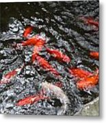 Hot Orange Carp Fish Metal Print by Linda Phelps