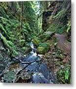How Green Is My Glen Metal Print by Gary Eason