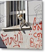 How Much Is That Doggie In The Window? Metal Print by Kurt Van Wagner