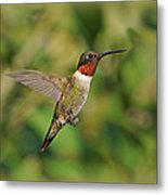 Hummingbird In Flight Metal Print by Sandy Keeton