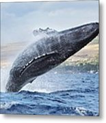 Humpback Whale Metal Print by M Swiet Productions