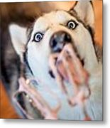 Hungry Eyes Metal Print by April Reppucci