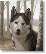 Husky In The Woods Metal Print by John Silver