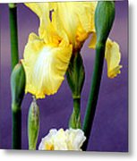 I Only Have Iris For You Metal Print by Kathy  White