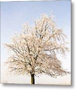 Iced Tree Metal Print by Anne Gilbert