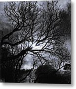 Ichabod's Pathway Metal Print by Donna Blackhall