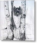 Ihasa In The Woods Metal Print by Joette Snyder