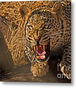 In No Uncertain Terms Metal Print by Ashley Vincent