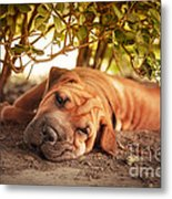 In The Shade Metal Print by Jane Rix