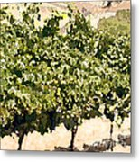 In The Vineyard Metal Print by Artist and Photographer Laura Wrede