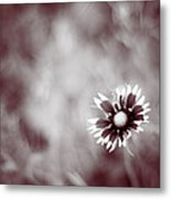 Indian Blanket Flower Metal Print by Darryl Dalton