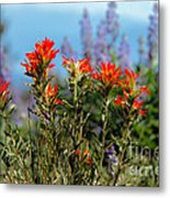 Indian Paintbrush Metal Print by Robert Bales