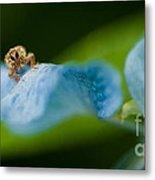 Insect Metal Print by Venura Herath