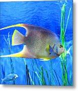 Into Blue - Tropical Fish By Sharon Cummings Metal Print by Sharon Cummings