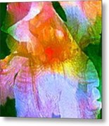 Iris 53 Metal Print by Pamela Cooper