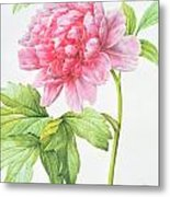Japanese Tree Peony Metal Print by Pierre Joseph Redoute