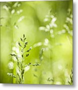 June Green Grass Flowering Metal Print by Elena Elisseeva