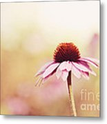 Just Peachy Metal Print by Beve Brown-Clark Photography