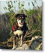 Kayaker's Best Friend Metal Print by James Peterson