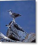 King Of The Hill Metal Print by Skip Willits